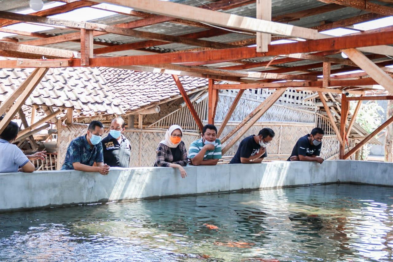 Wabup Harapkan Pembudidayaan Ikan Koi Dapat Tingkatkan Pendapatan Masyarakat